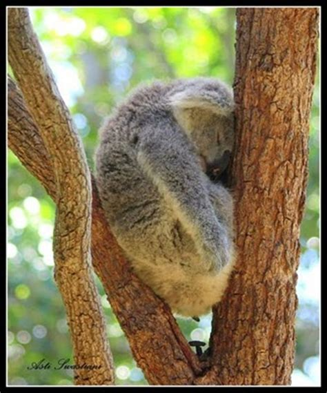 10 Funny Animals In The Most Awkward Sleeping Positions